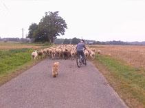 Bike shepherd!